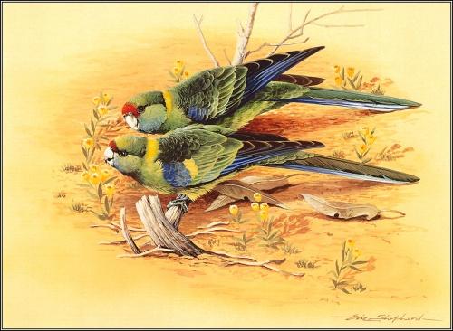 Работы Eric Shepherd. Birds (59 работ)