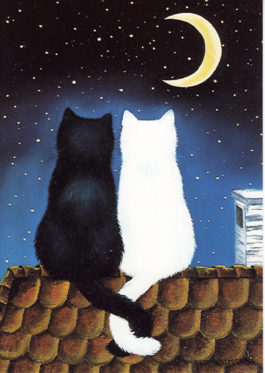 картинки два влюбленных кота