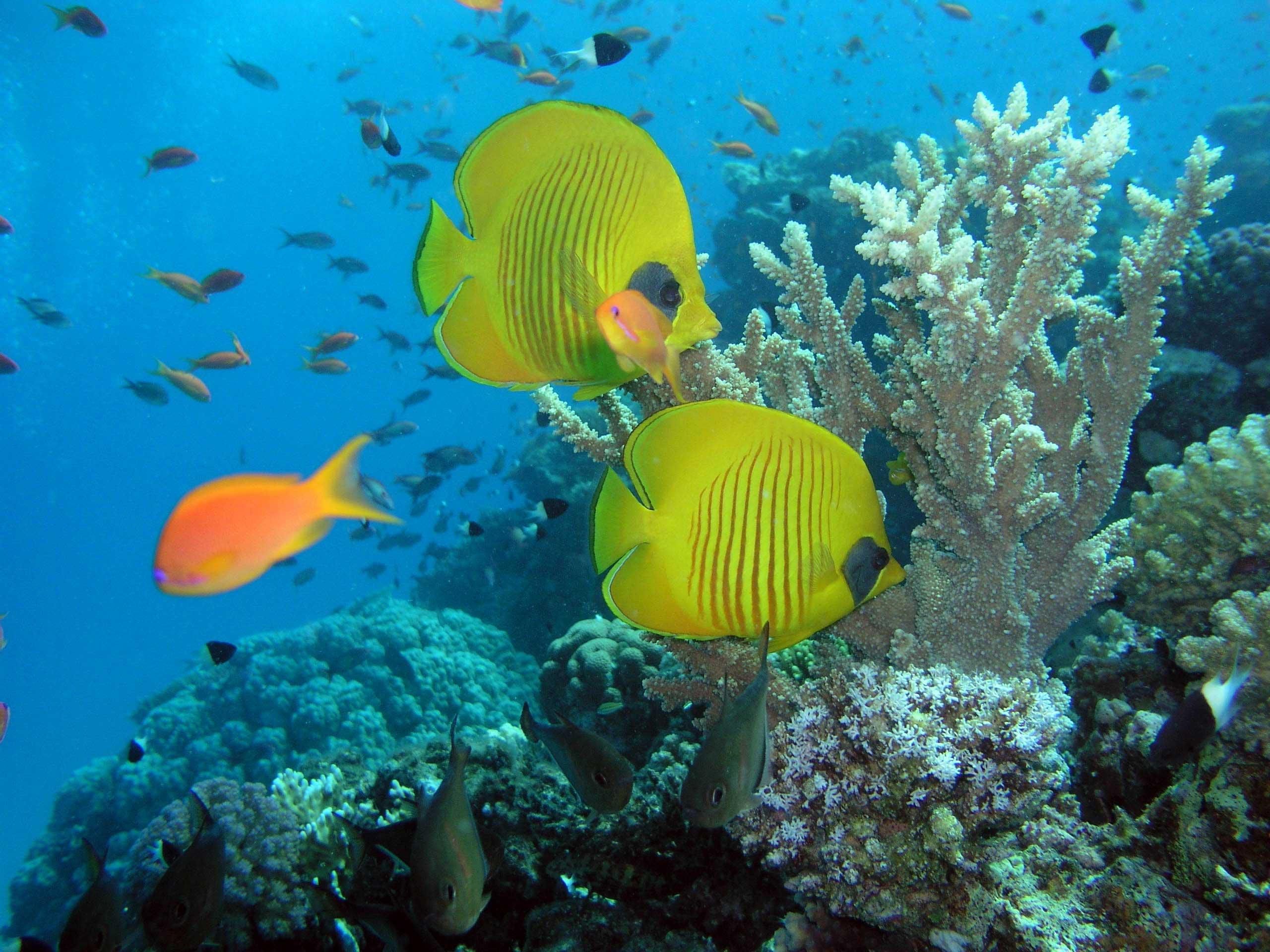 Картинка рыбы красного моря