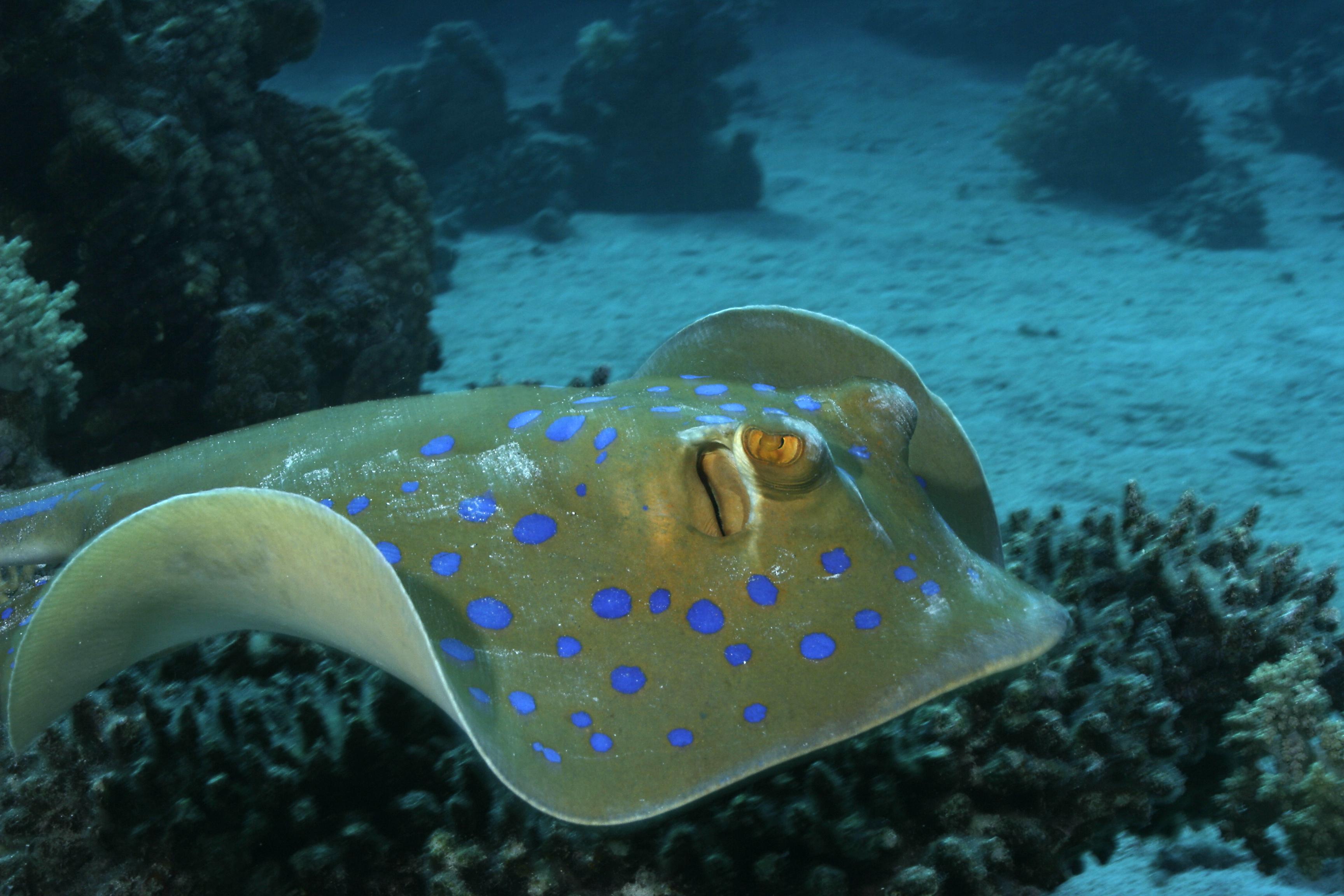 это подводные обитатели хорватии список и фото ассортимента позволяет