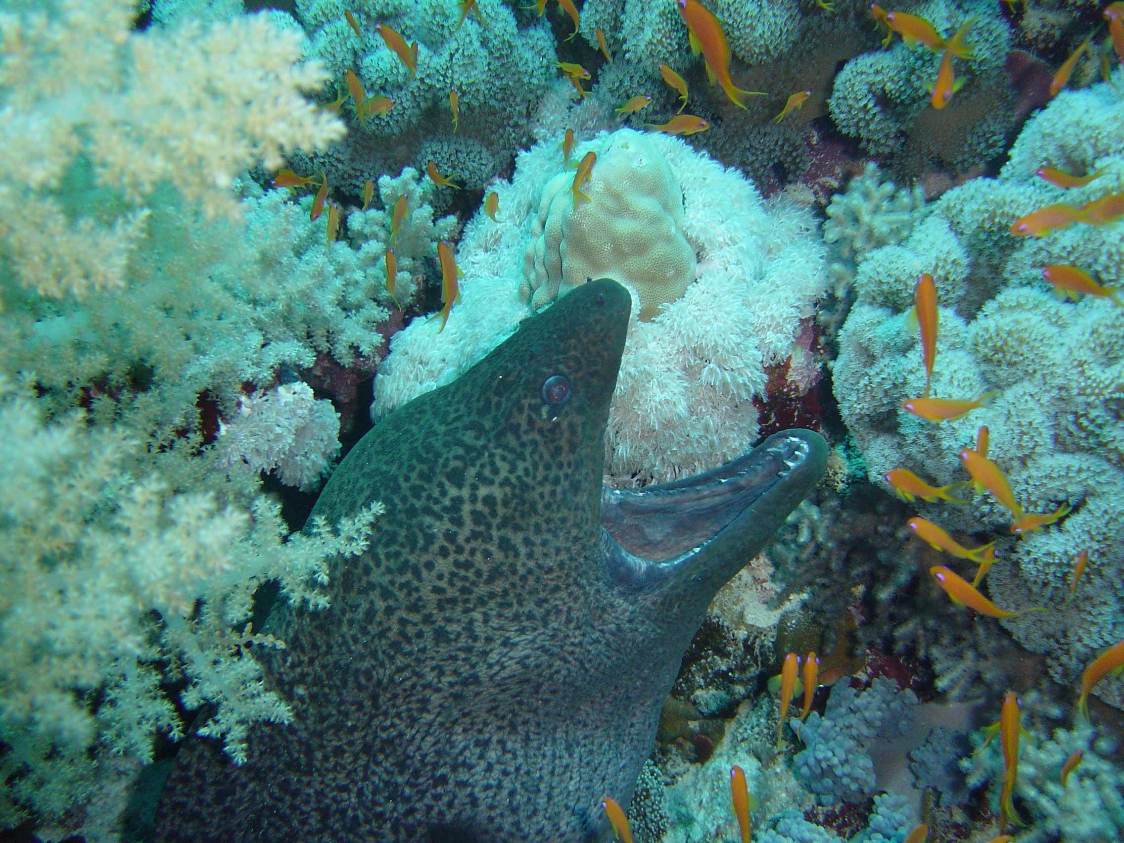 печень хорошо мурена фото красное море устанавливают камеру