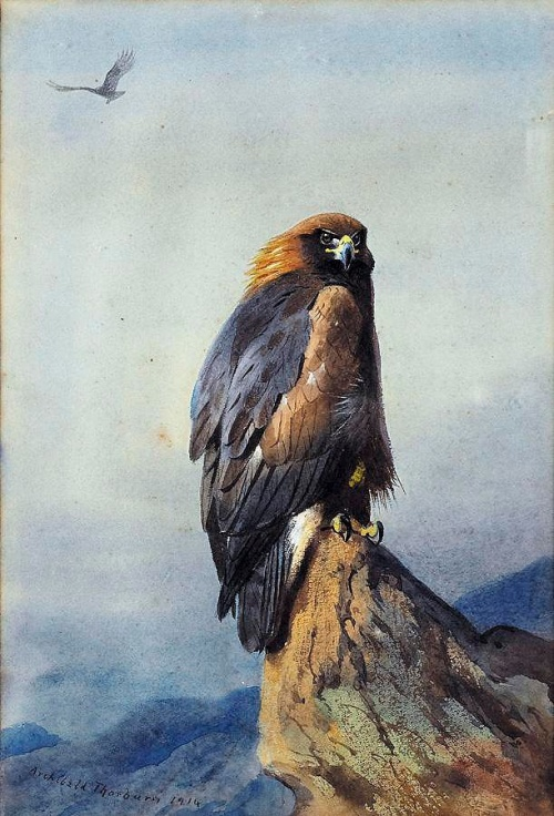 Archibald Thorburn (1860 - 1935) (130 работ)