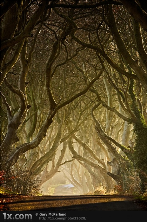 30 magical examples of tree photography (30 фото)