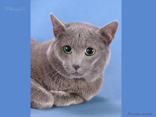 Фото кошек от фотографа Валентина Мельникова (367 фото)