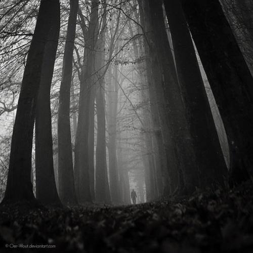 Фотограф Oer-Wout (64 фото)