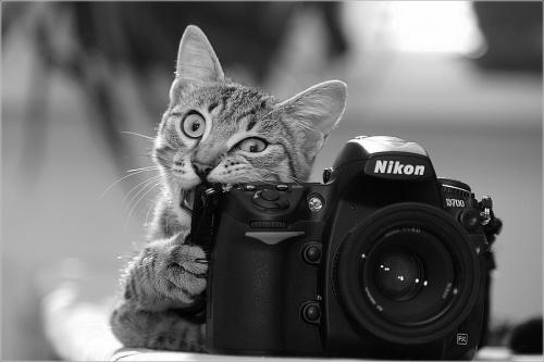 Фотографы улыбаются. Дубль 2 (46 фото)