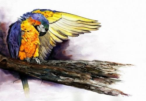 Животные и люди в творчестве Питера Вильямса (42 работ)