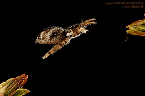 Животные в движении (Скотт Линстед) (76 фото)