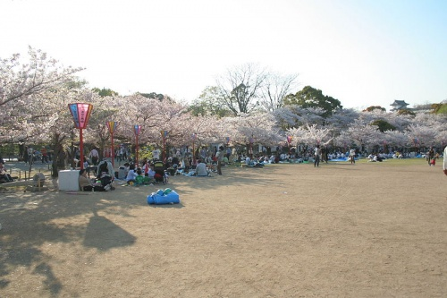 http://cp12.nevsepic.com.ua/79-2/thumbs/1355609376-800px-himeji_castle_april_09.jpg