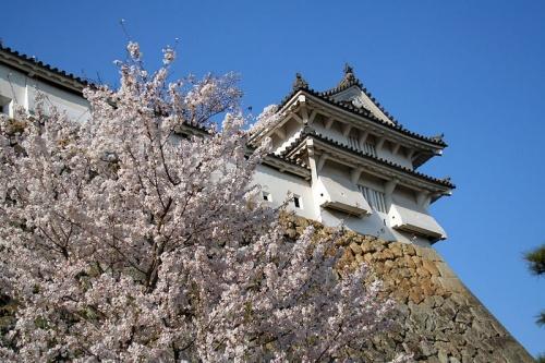 http://cp12.nevsepic.com.ua/79-2/thumbs/1355609378-800px-himeji_castle_april_18.jpg