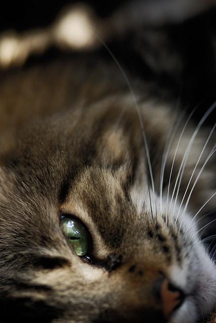 Девчонки и котята и щенки и поросята (510 фото)