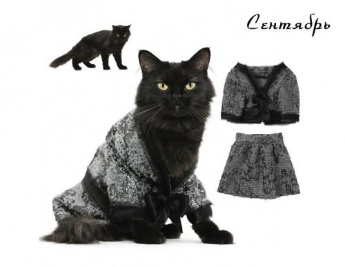Модные кошки (12 фото)