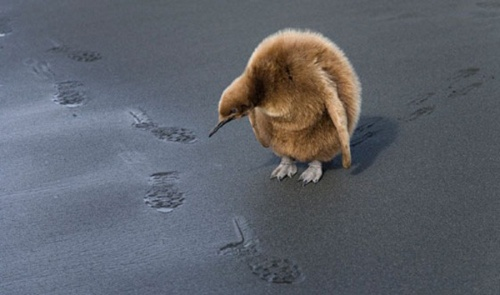Великолепно заснятые моменты из жизни животных (70 фото)