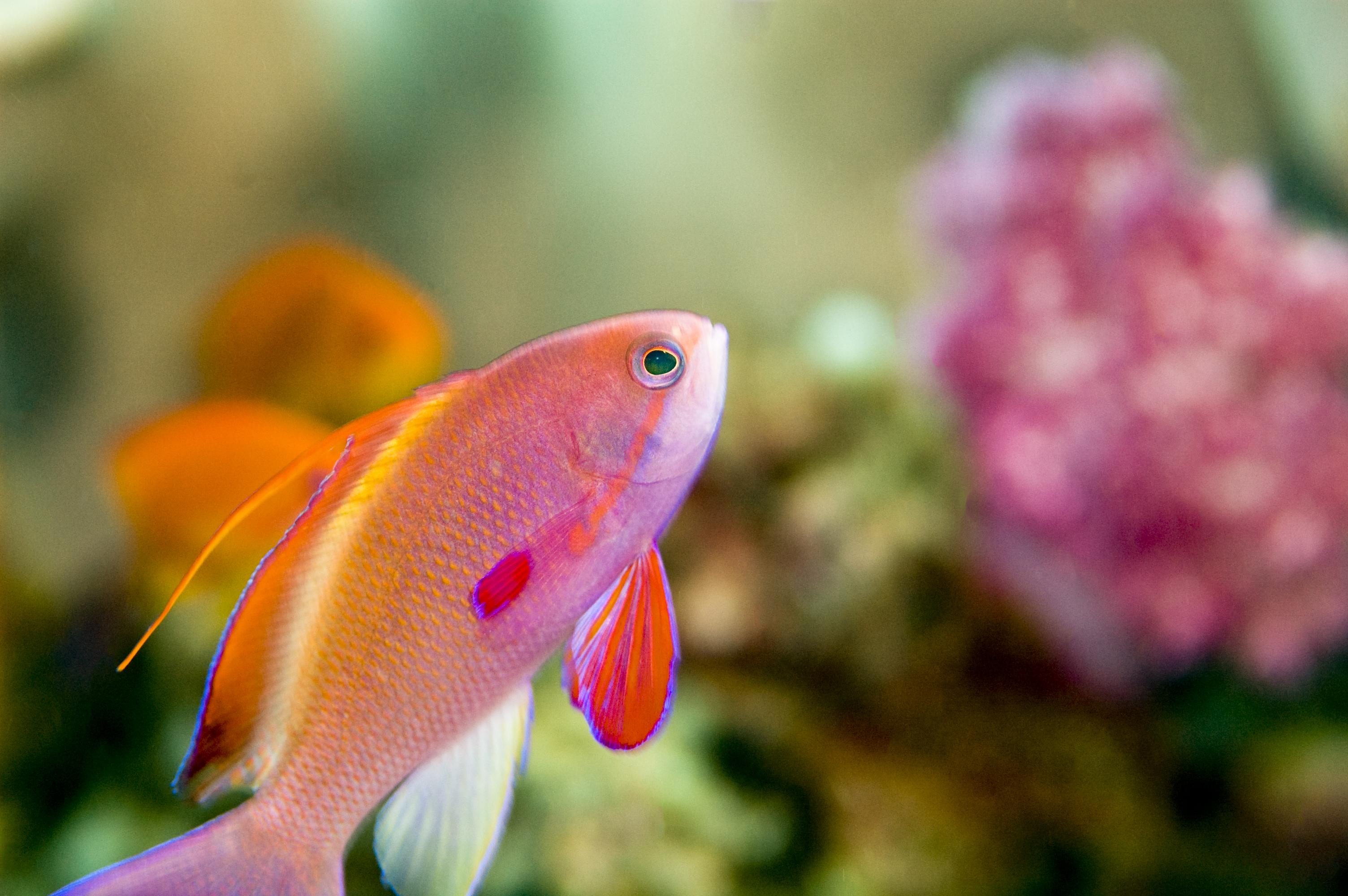Hermosos peces coloridos taringa - Poisson shark aquarium ...