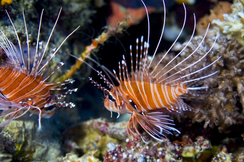Beautiful underwater world (25 фото)