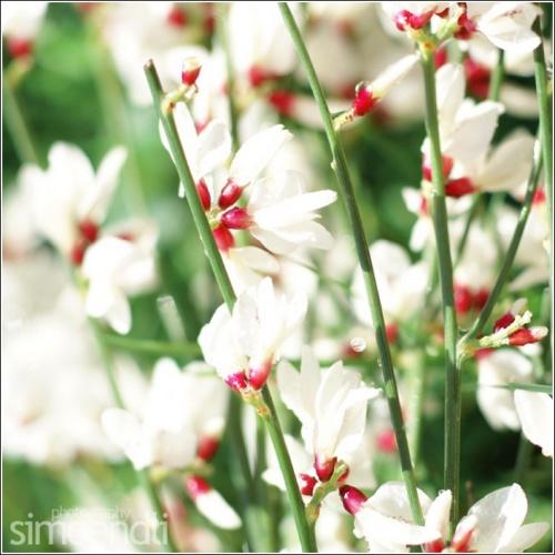 Цветочное настроение Simoendli (92 фото)