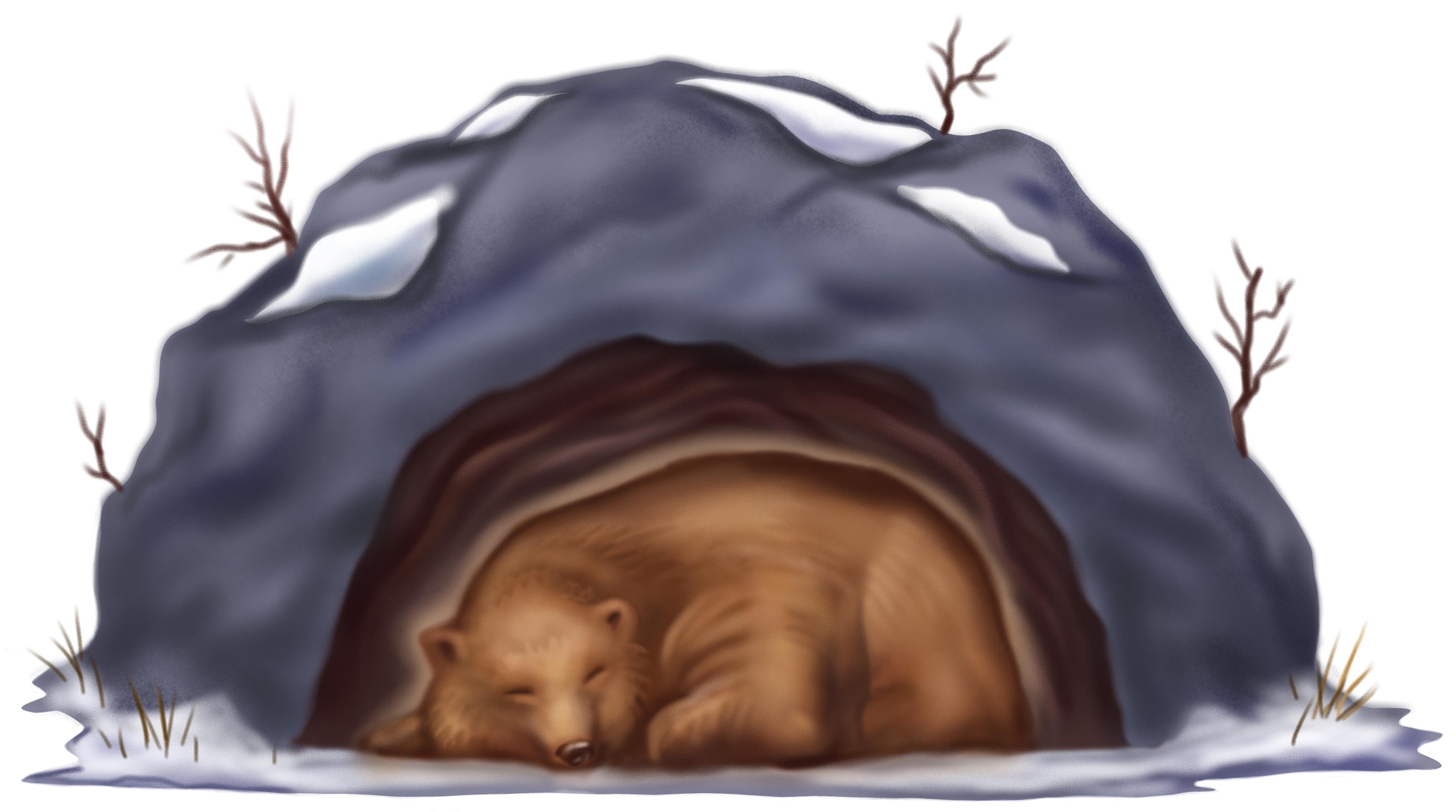 картинки спящих животных зимой породы собак
