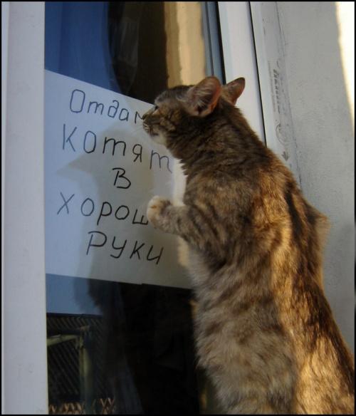 Фотограф Бедей Анатолий. Братья наши меньшие (57 фото)
