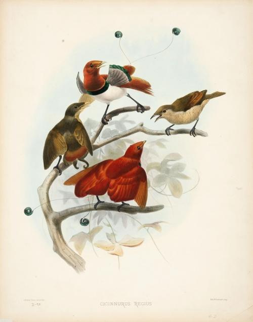 Птичье царство Daniel Giraud Elliot (102 работ)