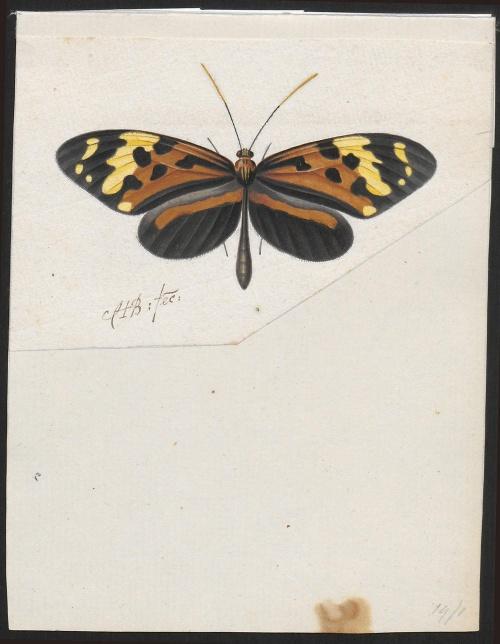 Iconographia Zoologica A Paper Animal Kingdom (part 4) (36 работ)