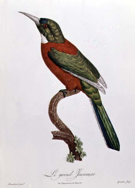 Художник Jacques Barraband (1767-1809) (90 работ)