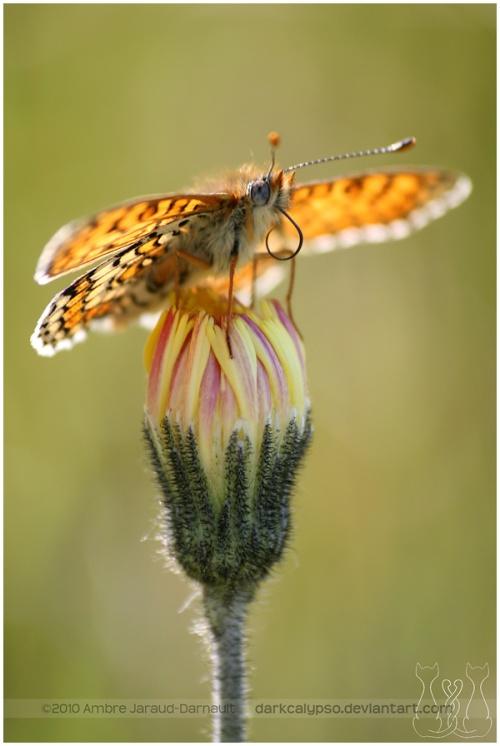 Животный мир глазами Ambre Jaraud-Darnault (51 фото)