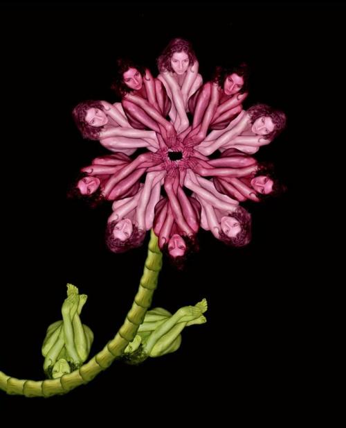 Необычные цветы Cecelia Webber (49 работ)
