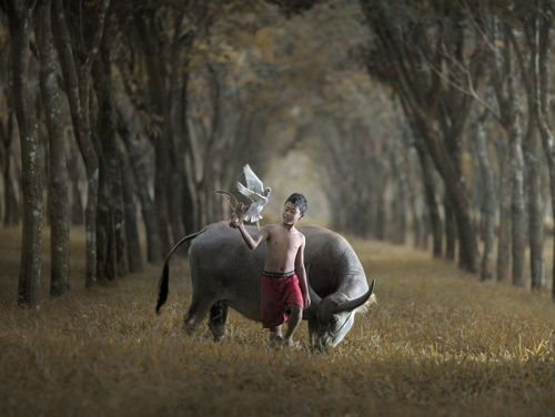 Фотограф Asit (56 фото)