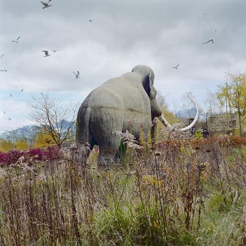 Животный мир глазами Simen Johan (48 фото)