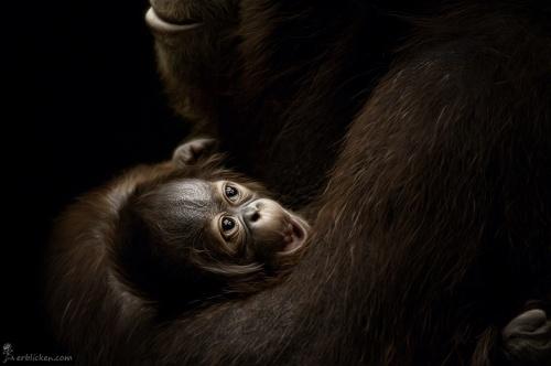 Животный мир глазами Manuela Kulpa (41 фото)