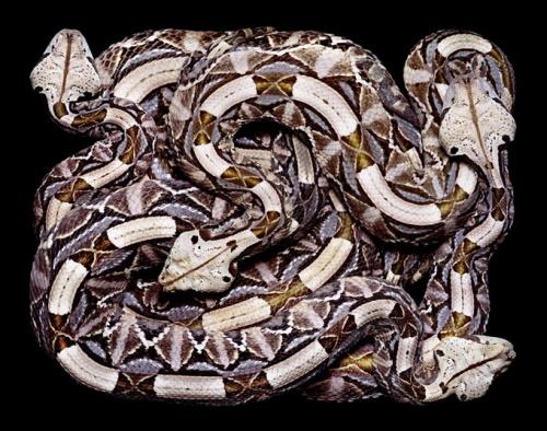 Фотограф Guido Mocafico - Snakes (2004) (26 фото)