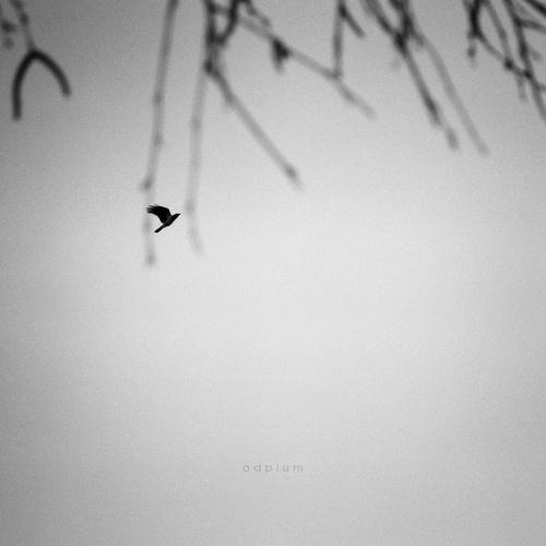 Минимализм в работах фотографа под ником odpium (46 работ)