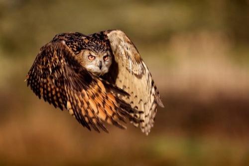 National Geographic - лучшие фото природы (40 фото)