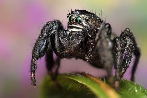 Ondrej Pakan 'Макро насекомых' (70 фото)