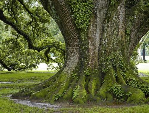 Деревья красивые и необычные (58 фото)