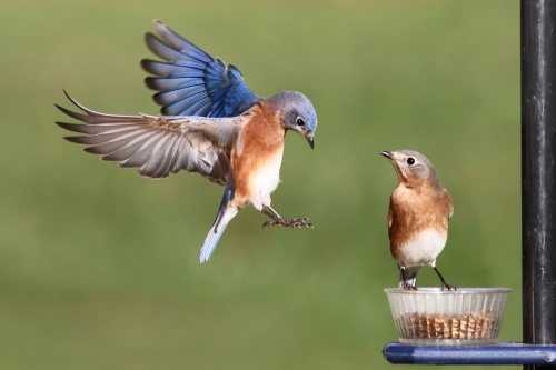 Птичий мир - World of birds (45 фото)