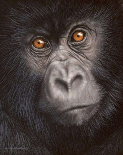 Rachel Stribbling - Дикая природа (43 работ)