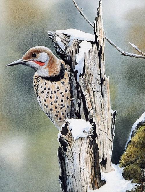 """Susan Bourdet """"Птицы в природном интерьере"""" (37 работ)"""
