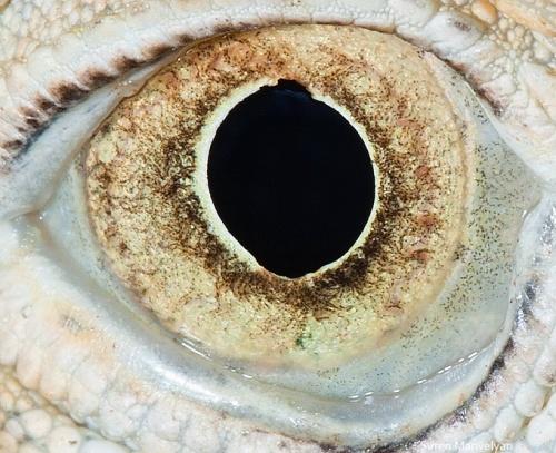 Глаза животных (16 фото)
