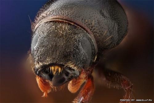 Подборка фотографий с насекомыми (21 фото)