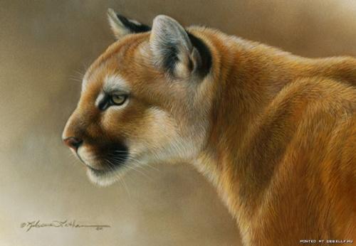 Дикий мир живой природы от Ребекки Латам (17 работ)