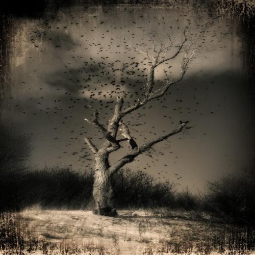 Фотограф Александр Михайленко. Мистические пейзажи (43 фото)