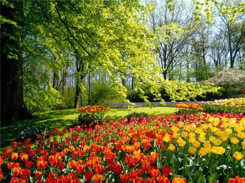 И пришла Она - Весна... (25 фото)