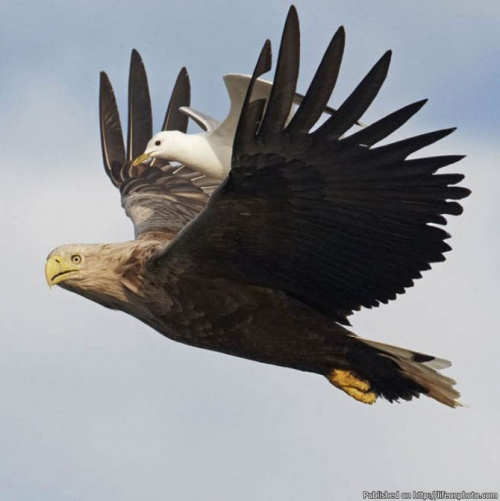 Волшебные моменты из жизни птиц (25 фото)