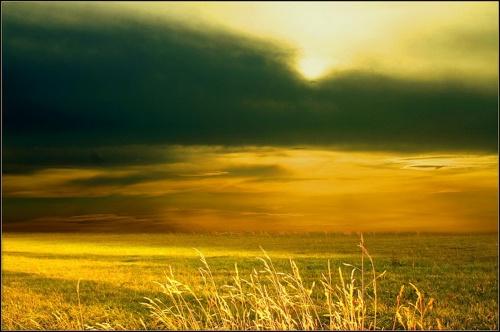 Красивые фото полей