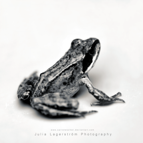Фотограф Julia Lagerstrom (CarrotStalker) (47 фото)