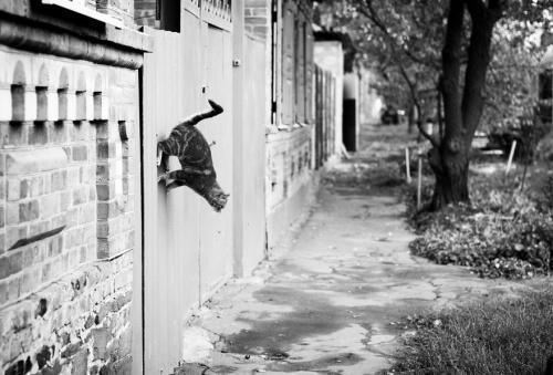Стоп-кадр или когда все замирает (31 фото)