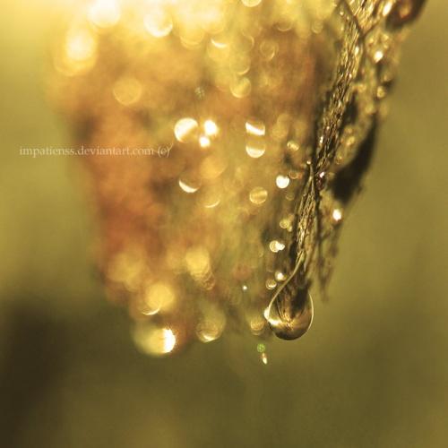 Красочные работы фотографа под ником impatienss (200 фото)