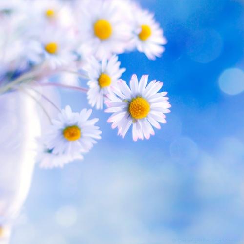 Аватарки цветы для контакта