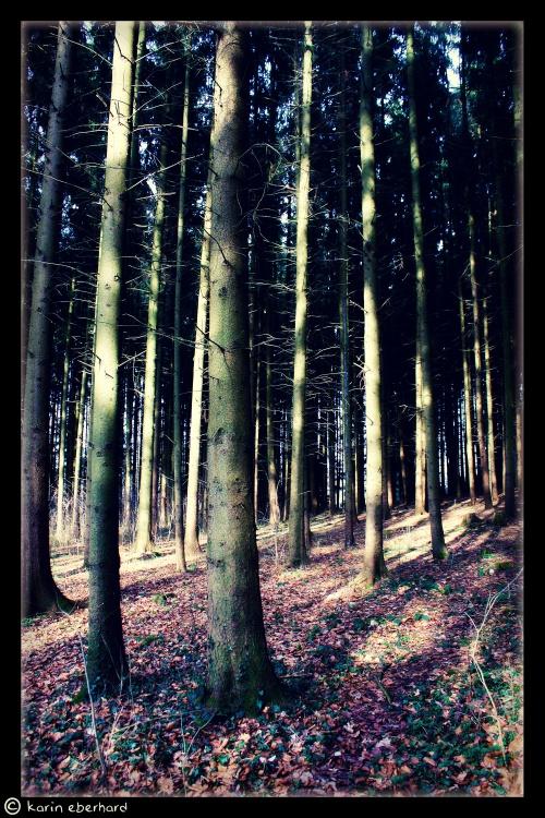 Фотограф Karin Eberhard (2011) (118 фото) (2 часть)